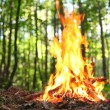 Bonfire in the forest. — Stock Photo #9600466