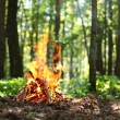 Bonfire in the forest. - 图库照片