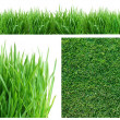 Spring green grass. - Stock Photo