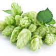 Branch of hops on a white background — Stock Photo #9602346