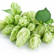 Stock Photo: Branch of hops on white background