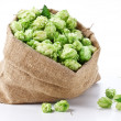 Sack of hops on a white background. - Stock Photo