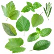 Collection of garden leaves - Stock Photo