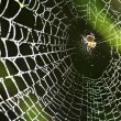 Spider on the web. - Lizenzfreies Foto