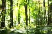 Nature blur background — Stock Photo