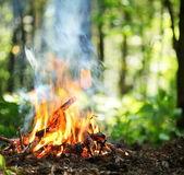 Feu de joie dans la forêt. — Photo