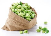 Sack of hops on a white background. — Stock Photo