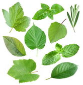 Collection of garden leaves — Stock Photo