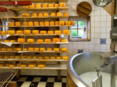 Cheese production — Stock Photo