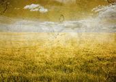 Field grunge — Stock Photo