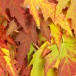 Autumn leaves — Stock Photo #8070780
