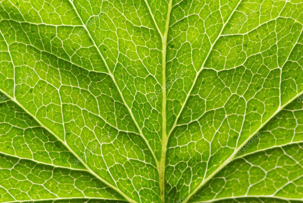 背景 壁纸 绿色 绿叶 树叶 植物 桌面 1023_685