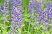 Flores do campo — Fotografia Stock