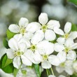 White flowers - Foto Stock