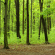 Green forest landscape - Foto Stock