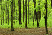 Green forest landscape — Stock Photo
