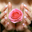 Giving a rose. Woman's hand — Stock Photo