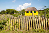 Fence of cactus on the island in the Caribbean — Stock Photo
