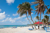 Tropical palm beach — Foto Stock