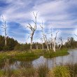 Wetland Forest — Stock Photo