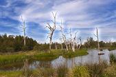 Bosque de humedal — Foto de Stock