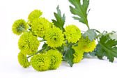 Bouquet from green flower — Stock Photo