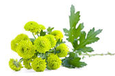 Green flowers — Stock Photo
