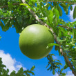 Stock Photo: Pomelo