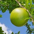 Pomelo — Stock Photo #9686040