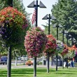 Hanging Flower Baskets in a Park - Stock Photo