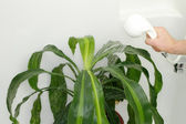 Giving Houseplant a Shower — Stock Photo