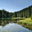 Mysterious lake among fir trees — Stock Photo