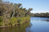 Blackwood River — Stock Photo