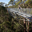 Stock Photo: Tree Top Walk