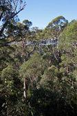 Tree Top Walk — Stock Photo