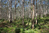 Leeuwin-Naturaliste Forest — Stock Photo
