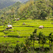Bali Rice Terraces — Stock Photo