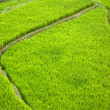 Bali Rice Terraces — Stock Photo #8834558