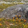 Stock Photo: Wildflowers and Lichen