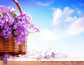 Bluebells spring flowers in a basket — Stock Photo