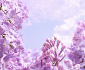 Art Spring lilac flower background — Stock Photo