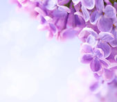 Art lilac flowers background — Stock Photo