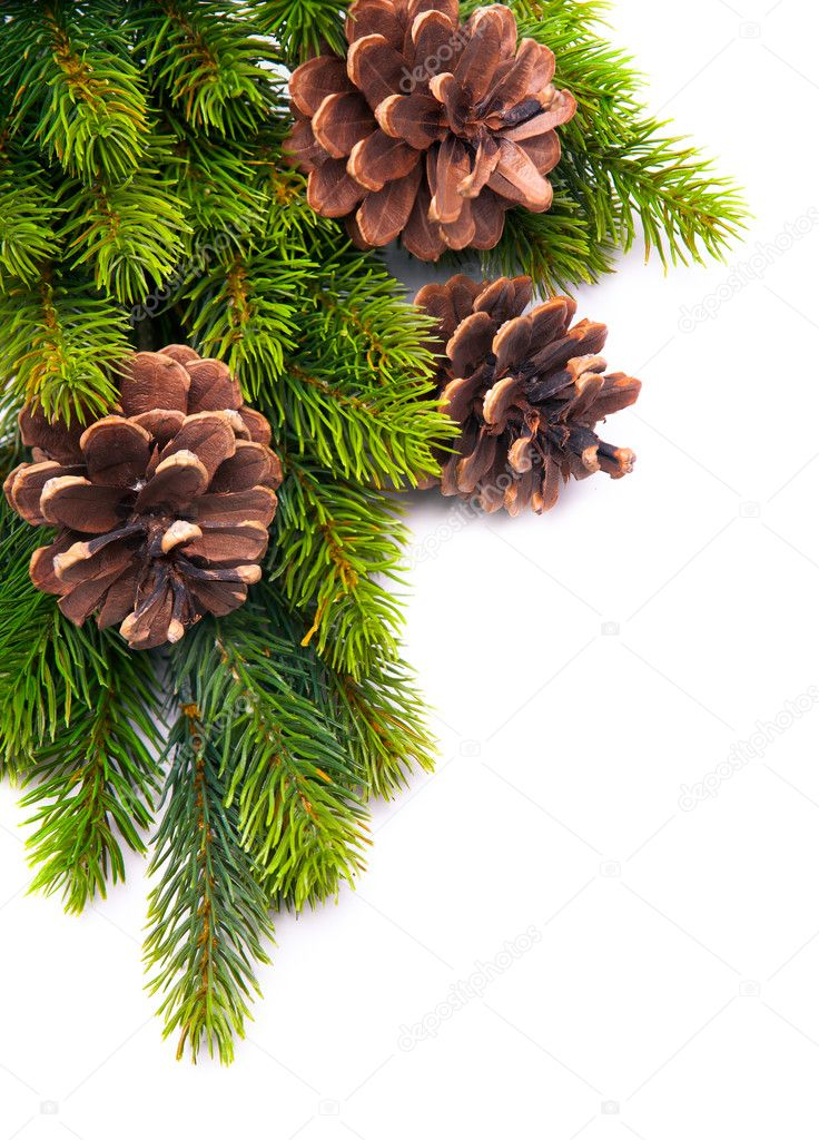 Christmas frame with fir tree branch on white background — Stock Photo #8039424