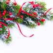 Photo: Branch of Christmas tree on white background