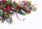 Branch of Christmas tree on white background — Stock Photo