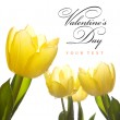 Spring Flowers tulips in the sunlight — Stock Photo
