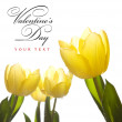 Easter tulips in the sunlight — Stock Photo