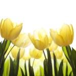 arte fiori selvatici ricoperti di rugiada alla luce del sole — Foto Stock