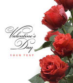 Art Valentine day greeting card with red roses isolated on white background — Stock Photo