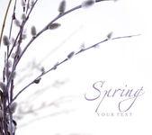 Arte primavera floración las ramas de sauce — Foto de Stock